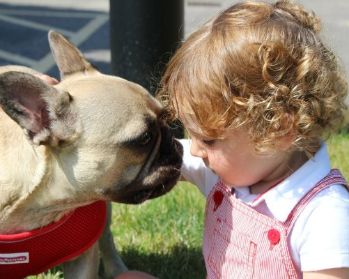Evelina London patient, Mattia, with Budu the French bulldog