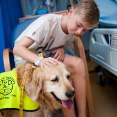 Boy stroking therapy dog